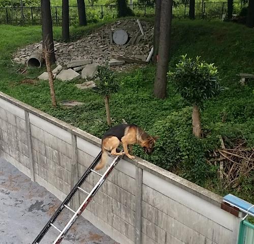警備犬取材.jpg