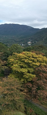 彫刻の森紅葉.jpg