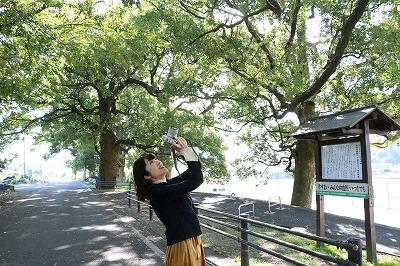 私の岩国クスノキ.jpg