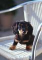 思い出の中で生き続けるマルちゃん~愛犬家と犬、そしてホテルの絆物語【わん!ダフルストーリー】