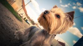 犬のチカラってすごい!80歳女性に生きる気力を与えた保護犬バロン【わん!ダフルストーリー】