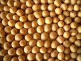 消滅の危機にあった地元産の大豆を復活させ普及に努める、ある大豆農家 【10時のグッとストーリー】