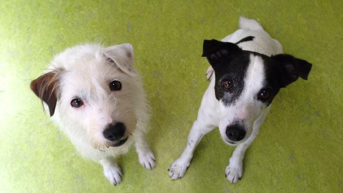 メイ(左)とシャドー(右)1