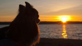犬は飼い主を映す鏡。愛犬が救った夫婦の危機。 【わん!ダフルストーリー】