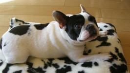 待っていてくれた「ウリ坊」。愛犬に学んだ人生の極意とは…? 【わん!ダフルストーリー】