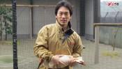 佐渡島の「トキ保護センター」に9年間勤務、国の特別天然記念物・トキの飼育と放鳥に関わってきた男性  【10時のグッとストーリー】