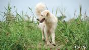 18歳・認知症の愛犬が行方不明に!高齢犬の飼い主さん必読のストーリー 【わん!ダフルストーリー】