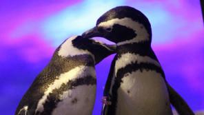 『ペンギンワッチ』で癒やされませんか?【ひろたみゆ紀・空を仰いで】