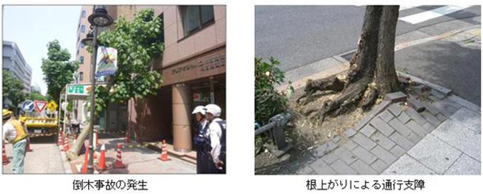 名古屋市 街路樹再生指針(市政情報)