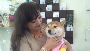 がんばれ、ひばりちゃん!前足に障害をもつ柴犬を支える家族の愛 【わん!ダフルストーリー】