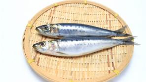 マイワシの漁獲量の変化の影に『レジーム・シフト』? 【鈴木杏樹のいってらっしゃい】