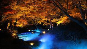 息をのむほどの幻想的な美しさ!六義園「紅葉と大名庭園のライトアップ」に行ってきました【ひろたみゆ紀・空を仰いで】