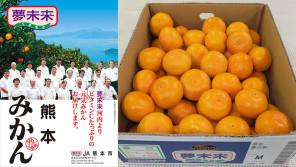 JA熊本果実連・夢未来みかんを使用したロールケーキやタルトを販売【ハロー千葉】