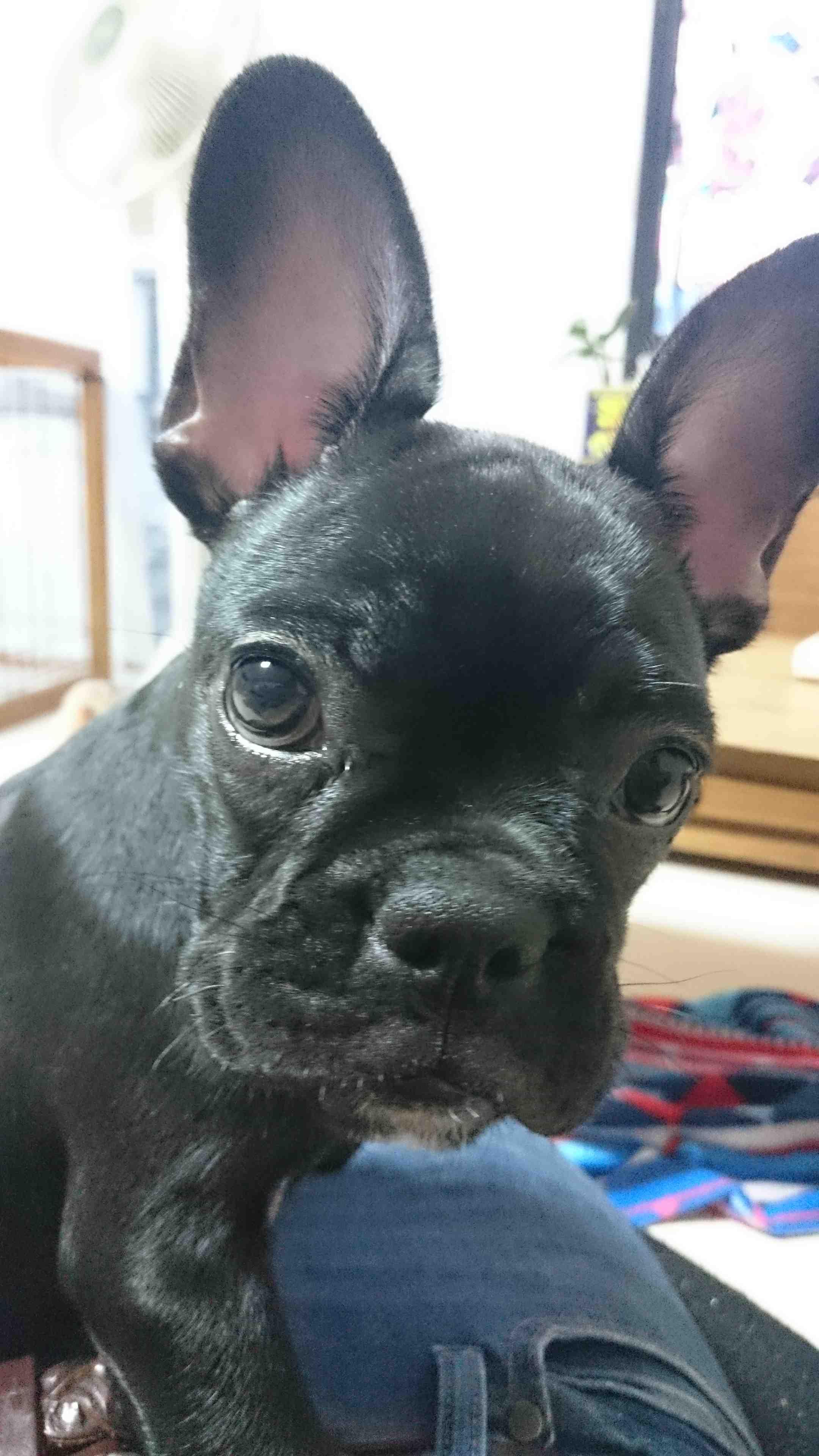 岩室家にとって2頭目の愛犬・寿
