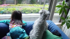 局アナ生活28年。支えてくれた愛犬に「ありがとう!」【わん!ダフルストーリー】
