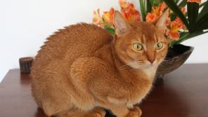 シクラメンやポインセチアも! 犬と猫に危険な植物【ペットと一緒に vol.3】