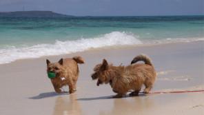 愛犬との旅行や帰省のときに知っておこう!~新幹線など電車移動編~【ペットと一緒に vol.4】