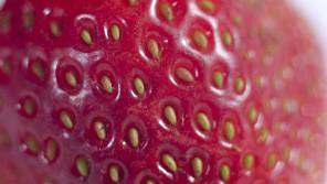 いつも食べてるイチゴの赤い部分は実ではありません。【鈴木杏樹のいってらっしゃい】