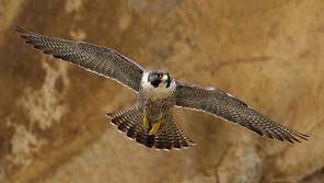 世界一速い鳥をご存知ですか?【鈴木杏樹のいってらっしゃい】