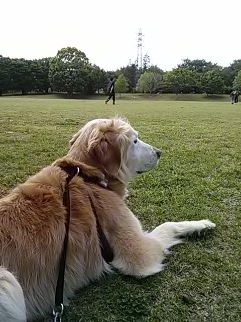 長散歩の合間のひと休み