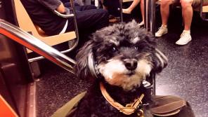 「ミスカラー」と呼ばれた愛犬ラティと私の11年。熊本から東京、そしてアメリカへ…【わん!ダフルストーリー】