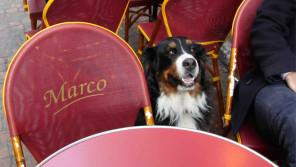 フランスの犬は「社会の一員」【ペットと一緒に vol.15】