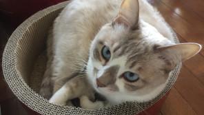 ペットシッターの仕事拝見!~猫の世話編~【ペットと一緒に vol.14】