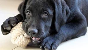 愛犬の自立心を養うための留守番&ひとり時間のススメ【ペットと一緒に vol.20】