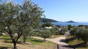 地中海と気候が似ている小豆島はオリーブ栽培に適しています【鈴木杏樹のいってらっしゃい】