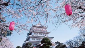 今週末から開催!第16回千葉城さくら祭り【ハロー千葉】