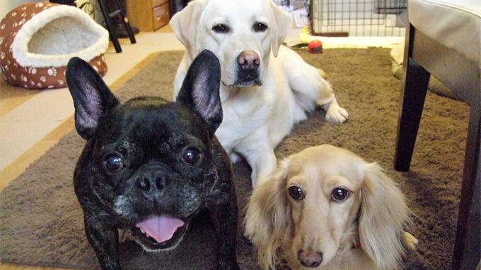 治療費数百万円。壮絶な闘病生活を乗り切った愛犬が教えてくれた…【わん!ダフルストーリー】