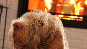 猫と犬が原因の火事が増加中!? 原因追究&防止策は?【ペットと一緒に vol.23】