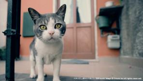 猫好き集まれ!岩合光昭写真展・ねこ&ねこのとけい【ハロー千葉】