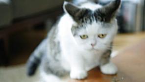 デビュー45周年の天才谷山浩子はもしや猫なのでは?!【雑学と音楽 ザツオン Vol.16】