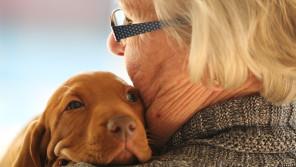 シニア世代になっても犬と暮らす!愛犬との新しい幸せのカタチ【ペットと一緒に vol.25】