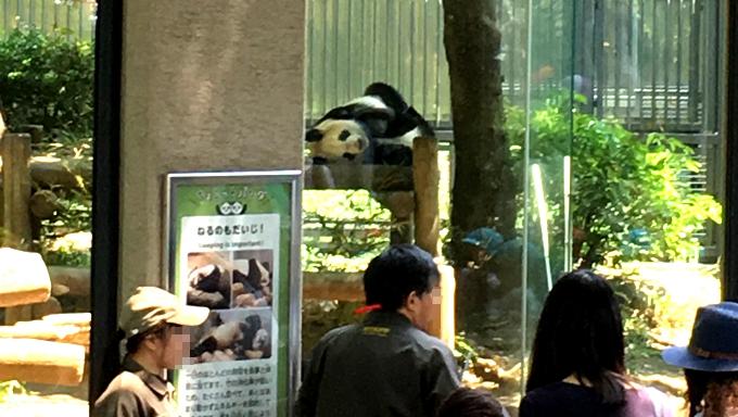 【新人記者(仮)あいばゆうな取材記】上野動物園でかわいいパンダ名刺に緊張しながら胸キュン!