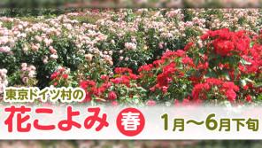 200品種5,000株ものバラがローズガーデンに咲き誇ります!【ハロー千葉】