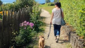 ご存知ですか?愛犬の散歩を10倍充実させる脳トレ【ペットと一緒に vol.28】