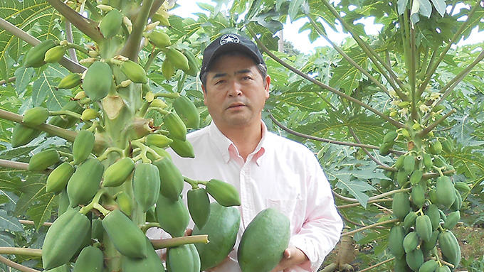 「日本でパパイヤの食文化を創る」10年の研究を経て露地栽培を開発した男性の物語【10時のグッとストーリー】