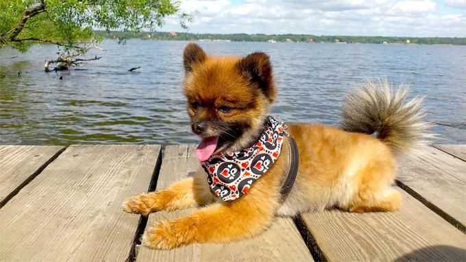 サマーカットで体調不良も!犬の被毛についての大切な知識【ペットと一緒に vol.38】