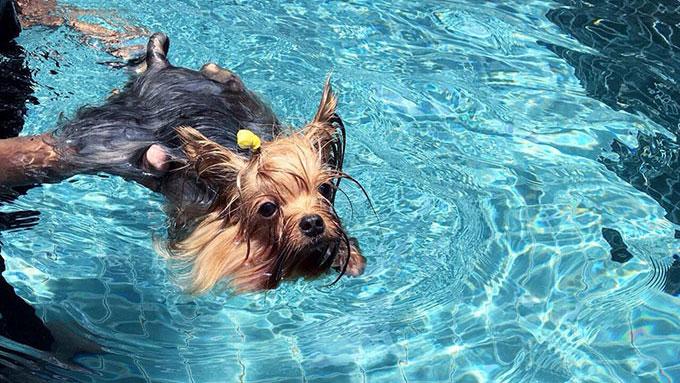 泳げない犬もいる!愛犬との水遊びを楽しむ秘訣とは?【ペットと一緒に vol.40】