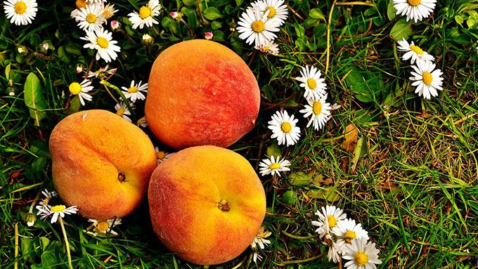 桃の豆知識①世界一甘い桃は日本産!【鈴木杏樹のいってらっしゃい】