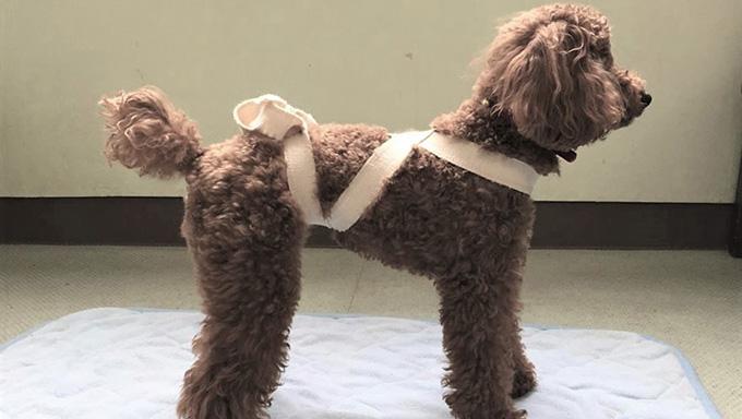 愛犬の健康促進に!身体のバランスを整える手技
