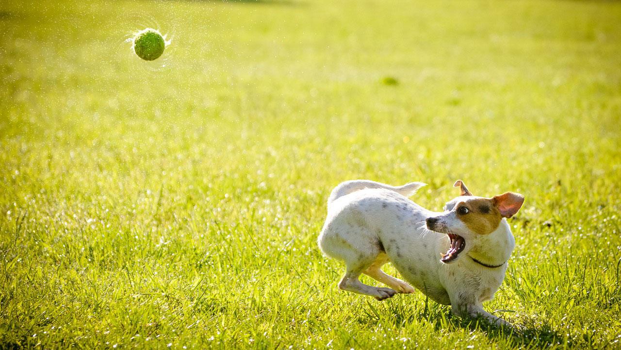 レジャー先での愛犬と飼い主の感染症を予防するには