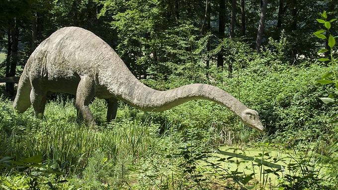 恐竜図鑑に載っているアレもコレも恐竜じゃない?