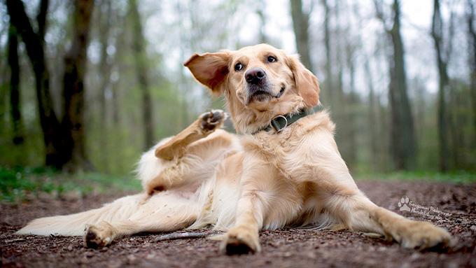 耳そうじ不要論を考える。愛犬の耳の健康を保つには