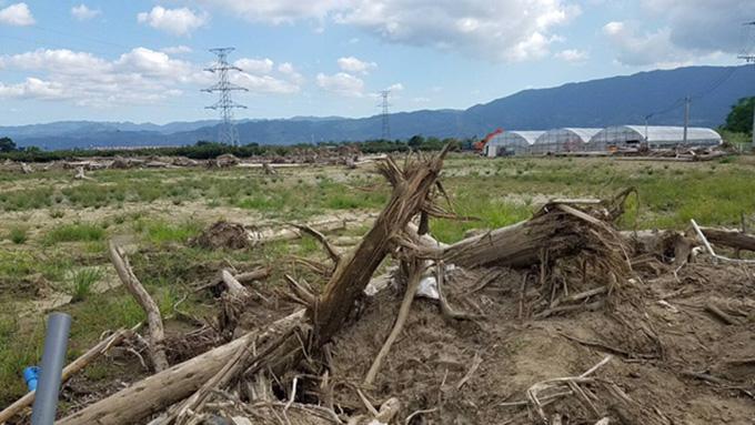 九州北部豪雨の被災地は今~まだまだ苦しい富有柿