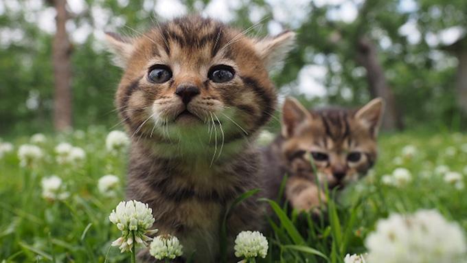 ネコ好き必見!『劇場版 岩合光昭の世界ネコ歩き コトラ家族と世界のいいコたち』