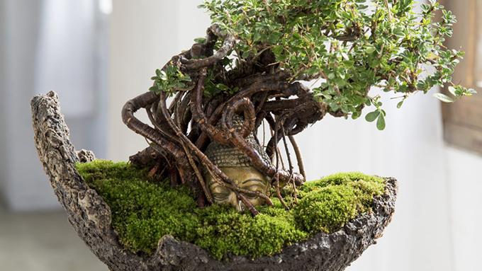 盆栽と仏像のベストマッチ!神秘的で惹き込まれるような盆栽って?