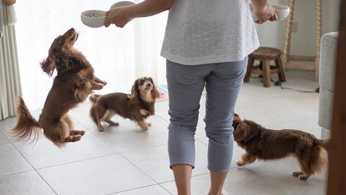 愛犬に導かれた「健康生活」。脱サラして浜散歩のできる町に移住、4頭と奏でるワンダフルライフ